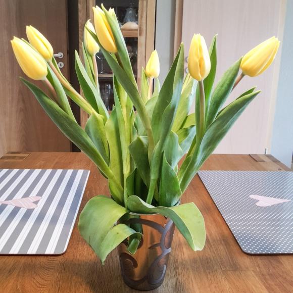 Gelbe Tulpen, silber Vase